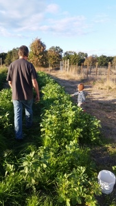 Z walks between the 2 beds while T picks a cabbage leaf on the other side of the bed of greens