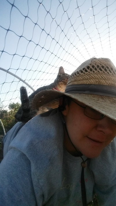 Grey kitty on my back. I'm inside the low tunnel and she is on top of the chicken wire that is on top of it.