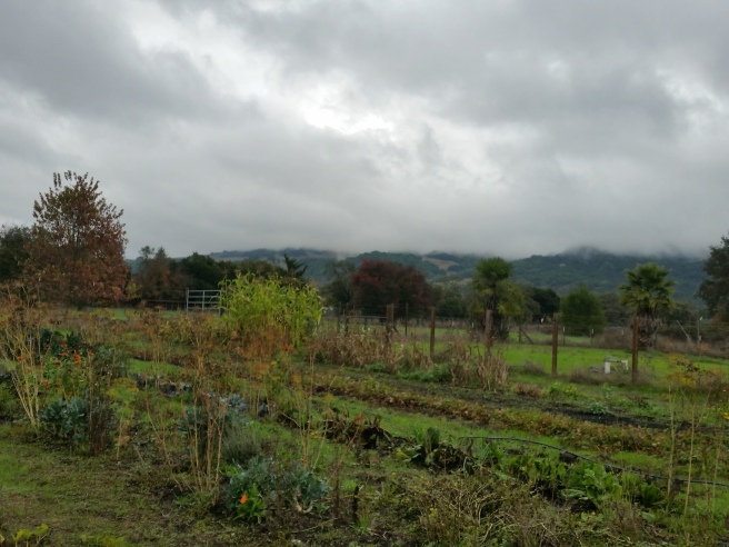 Fog has covered the top of the mountain that's visible from the garden